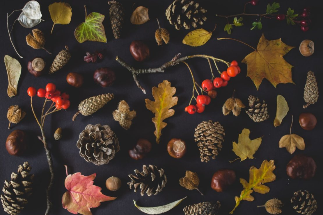 autumn leaves with acorns and maple leaves