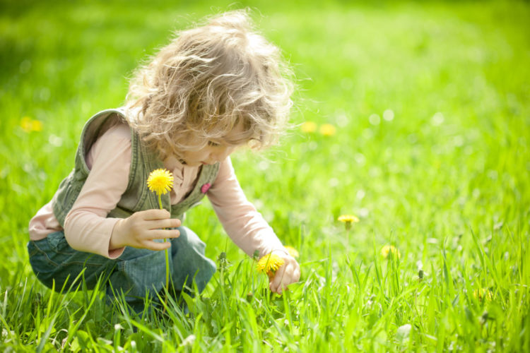 child girl picking daffodils in the garden