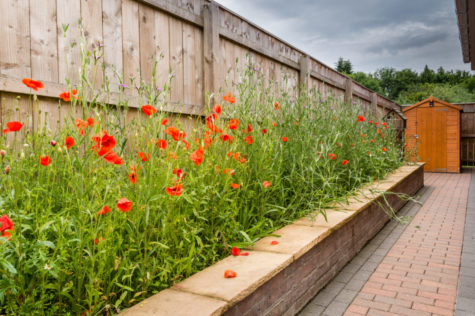a raised planter filled with poppies and wildflowers