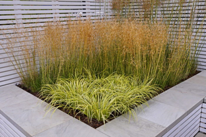 a raised planter with ornamental grasses
