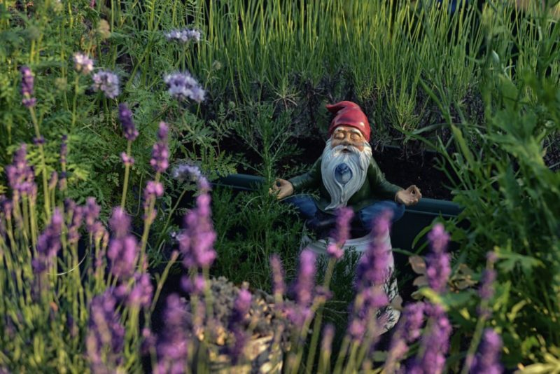 hidden among flowers, a gnome statuette sits in a meditative lotus position with a bluebird poking out from his beard
