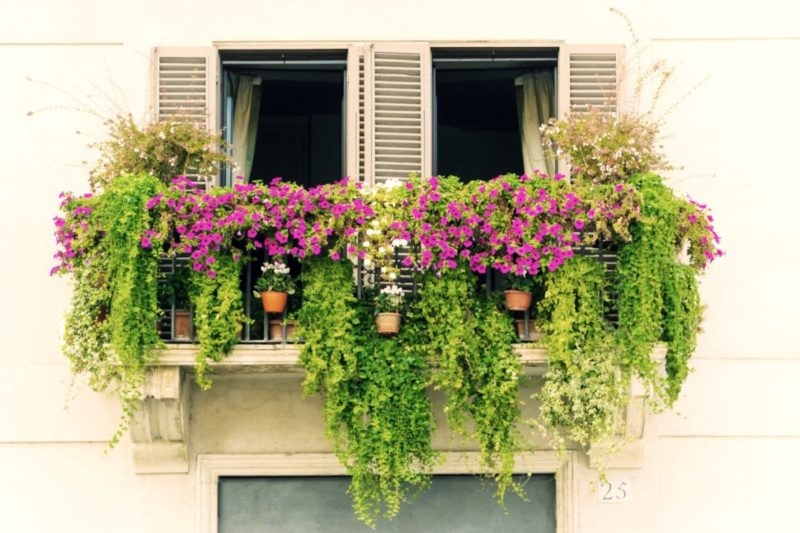 A European-style balcony with window shutters, overflowing with flowers and plants