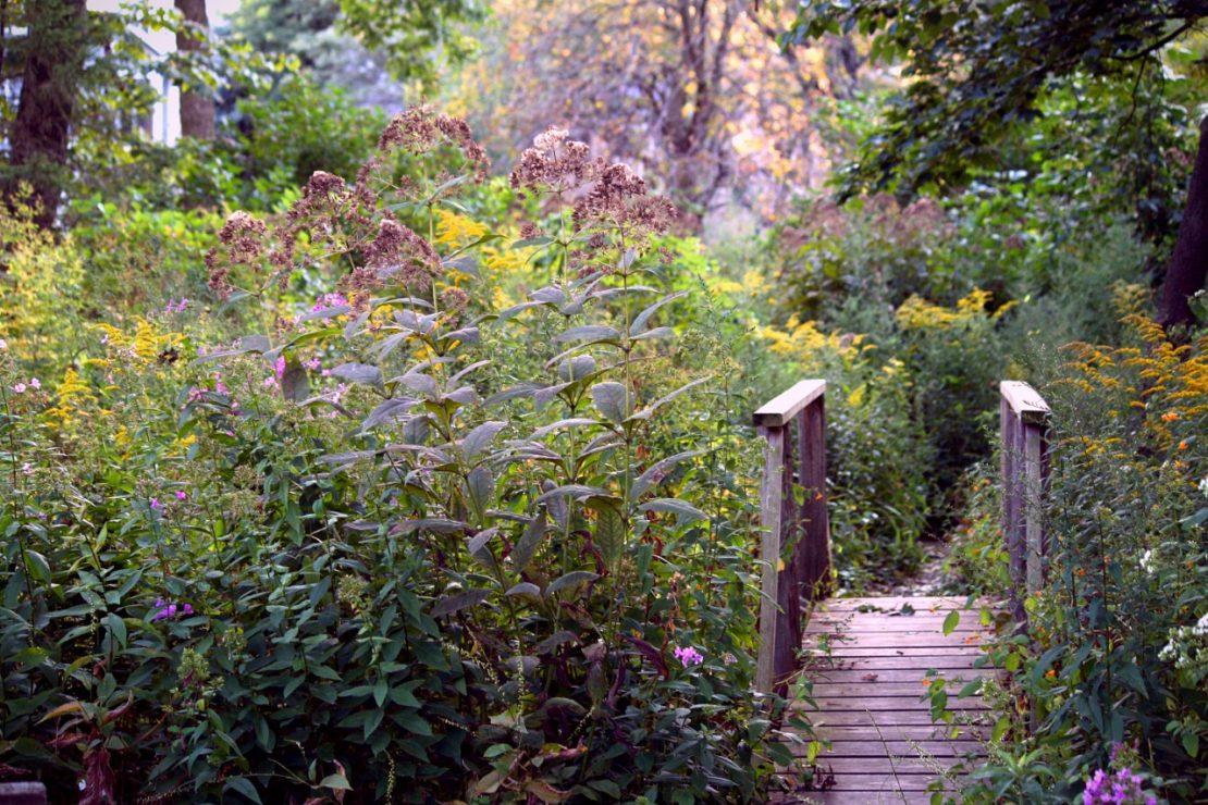 a small wooden bridge in an overgrown enchanted garden