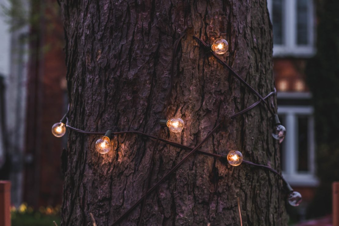 glowing string lights wrapped around a tree trunk at dusk