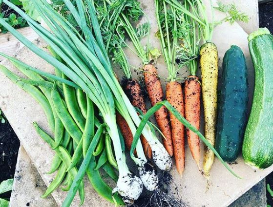 a collection of fresh vegetables, straight from the earth