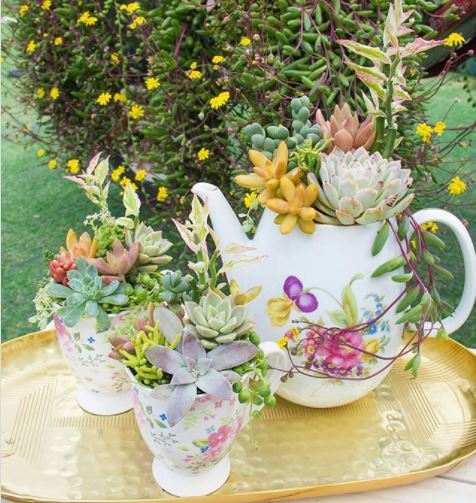 a collection of succulents planted in floral teacups and a matching teapot