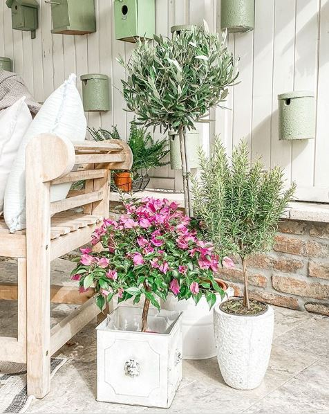a corner of a patio in neutral tones with a pale wooden bench and small trees in white pots