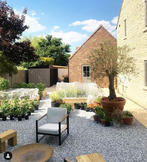 a gravel garden with an olive tree and lots of herbs in pots
