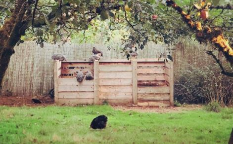 a group of chickens investigating some garden compost bins