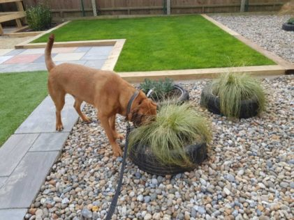 outdoor dog area ideas with some plants growing in a tyre planter