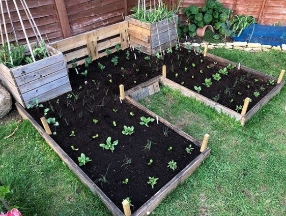 a raised vegetable planted with seedlings in neat rows