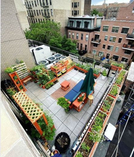 a rooftop patio in New York, with lots of plants and vegetables growing in planters, and a bench and parasol in the centre