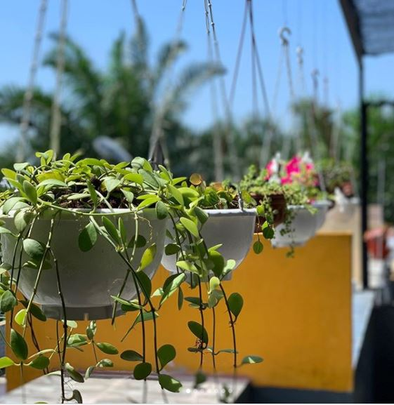 a row of small hanging baskets along the edge of a roof terrace