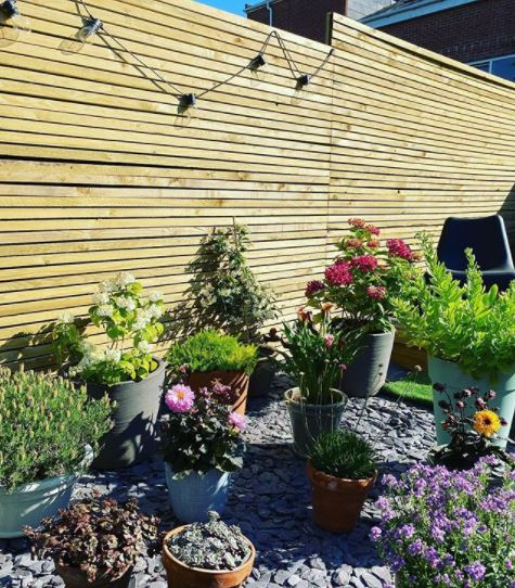 an attractive wooden fence behind a rock garden with lots of potted plants