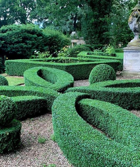 an immaculate knot garden, made from a single hedge trimmed into an interlinking shape
