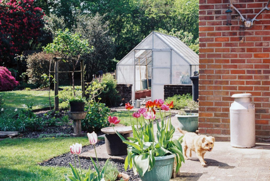 Outdoor Dog Area Ideas: Turn Your Garden Into a Puppy Paradise 5