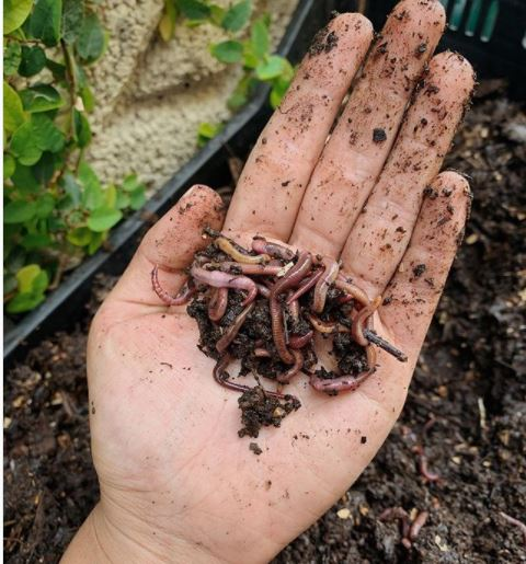 open palm holding some soil and worms