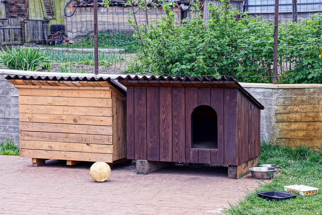 Outdoor Dog Area Ideas: Turn Your Garden Into a Puppy Paradise 3