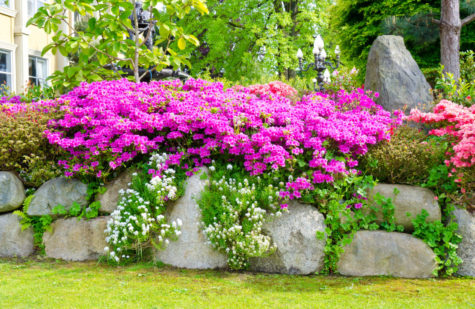 garden edging ideas using large stone boulders with flowers growing over them