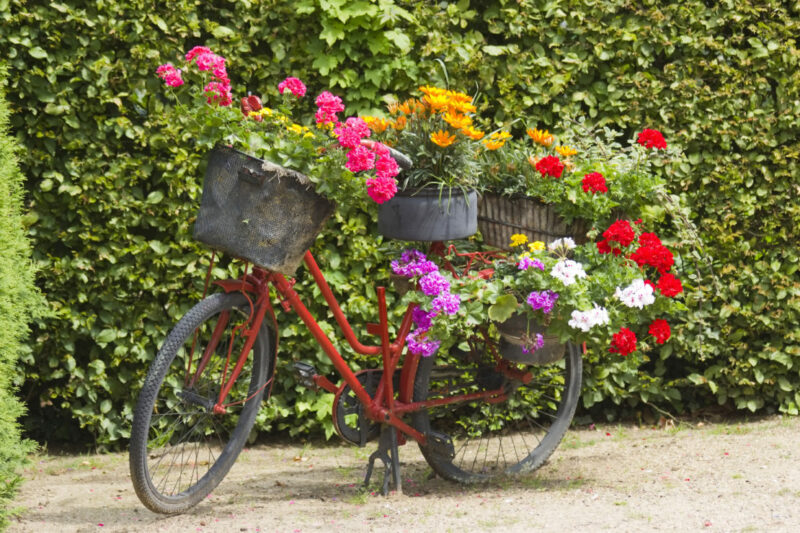 An old bicycle with baskets of flowers on the front, rear and seat
