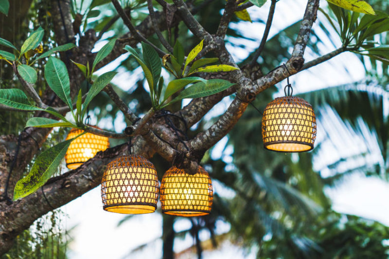 a cluster of small, woven lanterns hang from a leafy tree branch