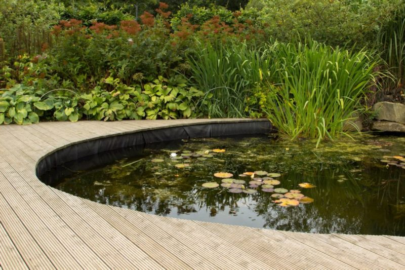 a tranquil garden pond surrounded by a clean wooden deck