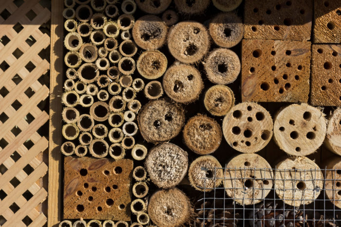 a close up of hollowed out sticks and bamboo canes arranged together for a bug hotel