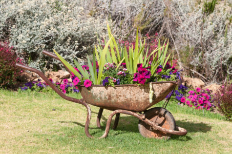 a rusted wheelbarrow overflowing with flowers