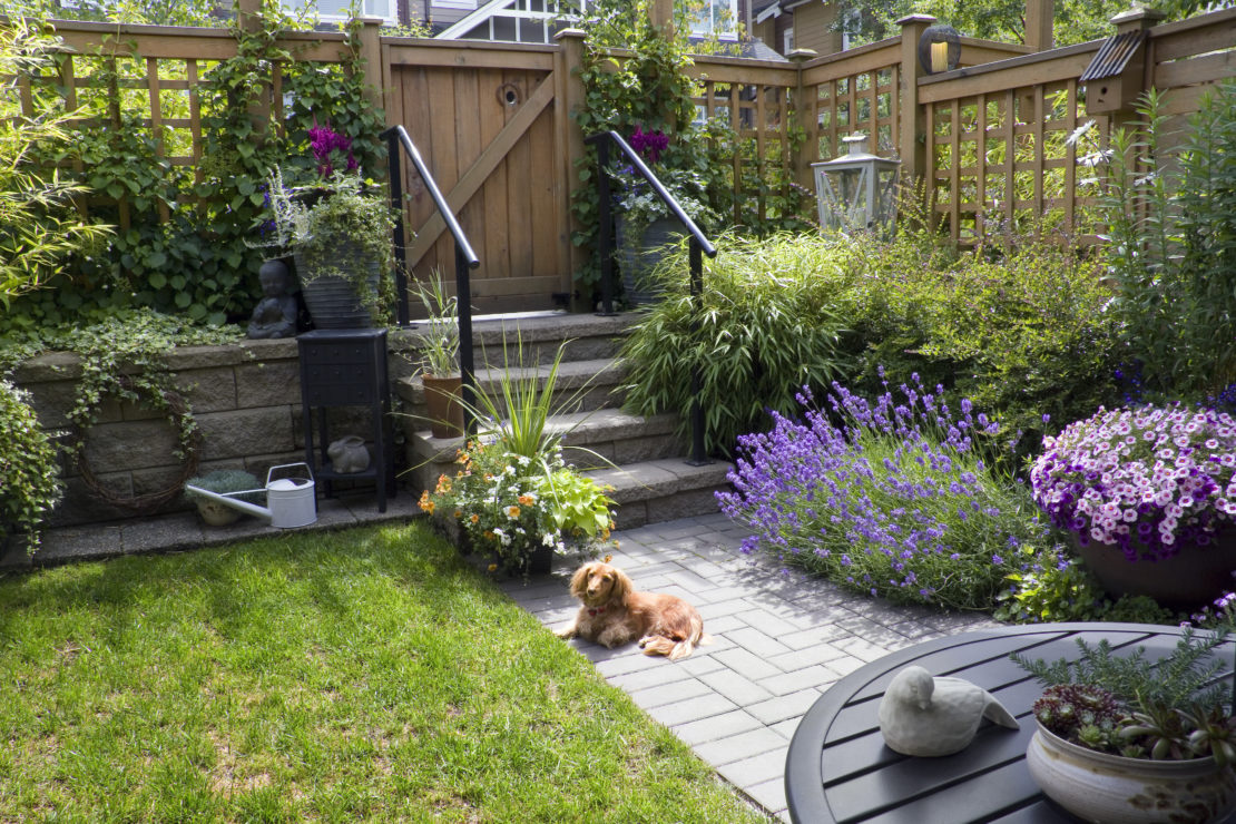 a long-haired dacshund laying in a small garden