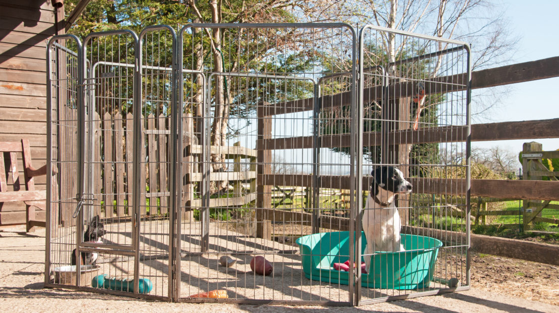 Outdoor Dog Area Ideas: Turn Your Garden Into a Puppy Paradise 4