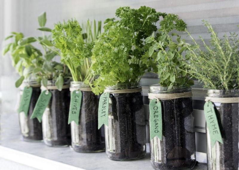 six mason jars with herbs growing inside