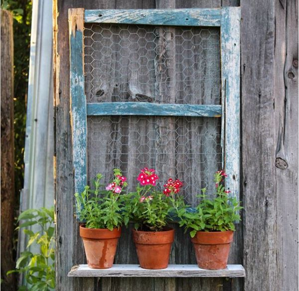 three potted flowers on a shelf with an old, chicken-wire window attached to the wall behind them as decoration