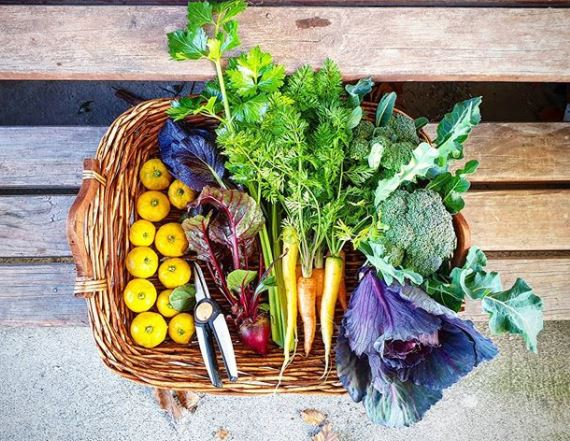 wicker basket filled with brightly coloured produce, fresh from the kitchen garden