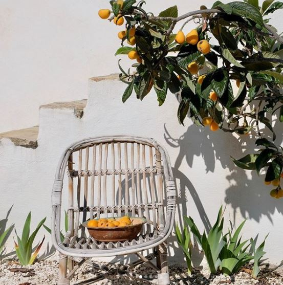 a sun-bleached bamboo chair beneath the branches of a fruitful citrus tree