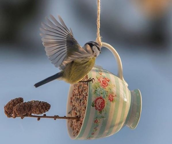 a blue tit balancing on a cup filled with bird seed