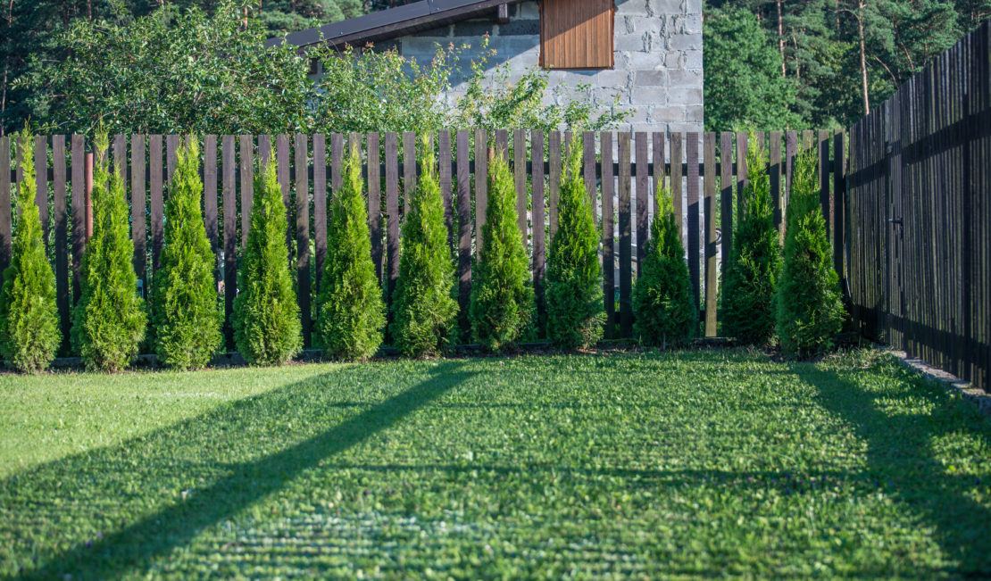 a row of small cypress trees at the end of a garden