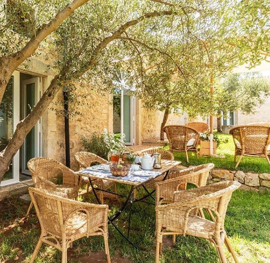 a sunny outdoor seating area beneath a pretty willow tree
