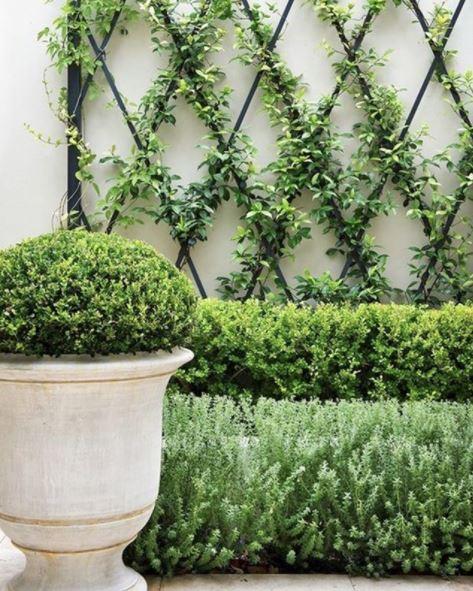 Italian style garden ideas: planting neat shrubs in front of a diamond shaped trellis