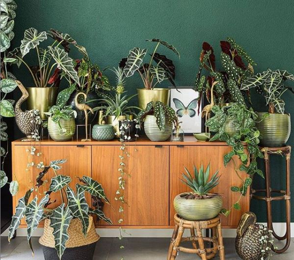 indoor garden ideas with a retro sideboard covered in plants