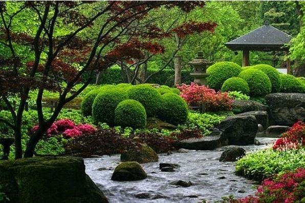 Japanese topiary bushes, called okarikomi