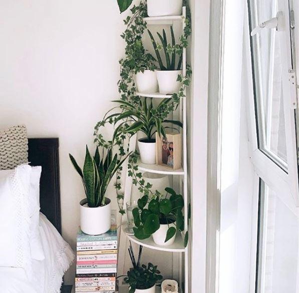 indoor garden ideas with happy, healthy plants on a corner shelf in a bedroom