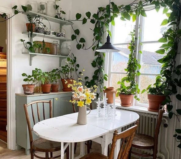 A sunny dining table surrounded by houseplants