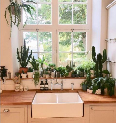 a bright kitchen windowsill filled with plants