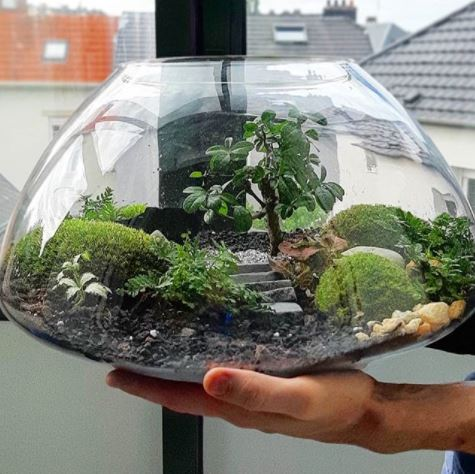 an oval terrarium with decorative landscaping inside