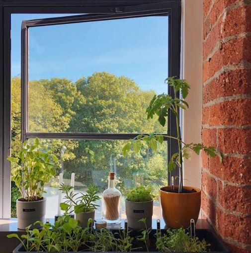 a selection of plants and herbs in pots on a sunny windowsill