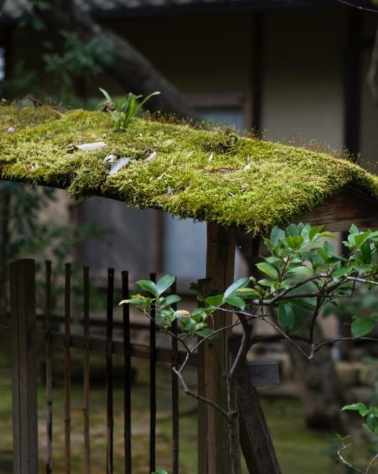 moss covering the archway above a Japanese stick gate