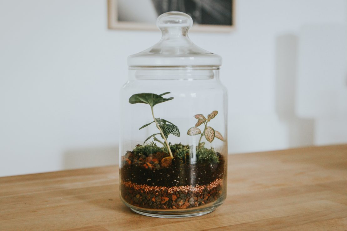 sealed terrarium with plants inside
