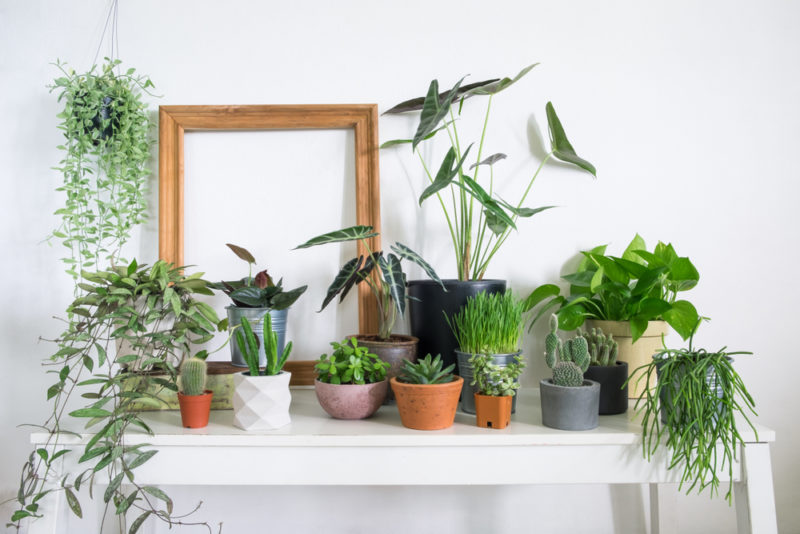 a collection of small plants in pots on a table
