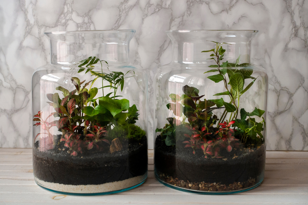 terrarium garden ideas with small plants and charcoal