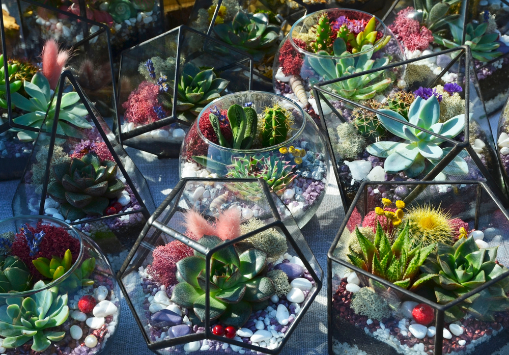 a collection of geometric terrariums filled with multicoloured succulents